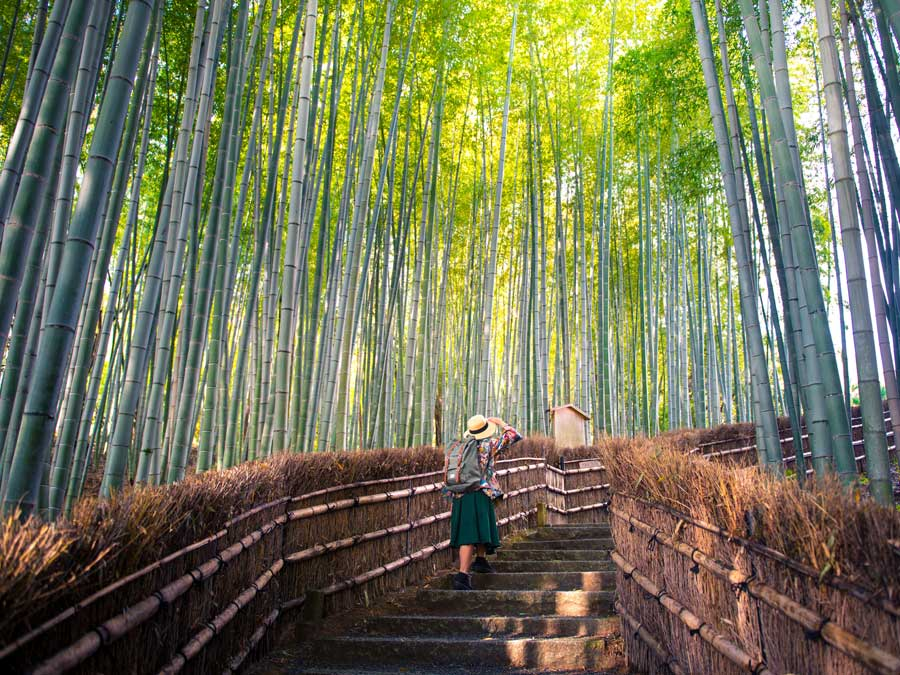 Walking through a bamboo forest in Kyoto, Japan